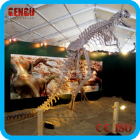 2014 Popular Fiberglass Dinosaur Fossil Replica Craft Sale