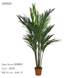 Palm Tree Nursery Suppliers