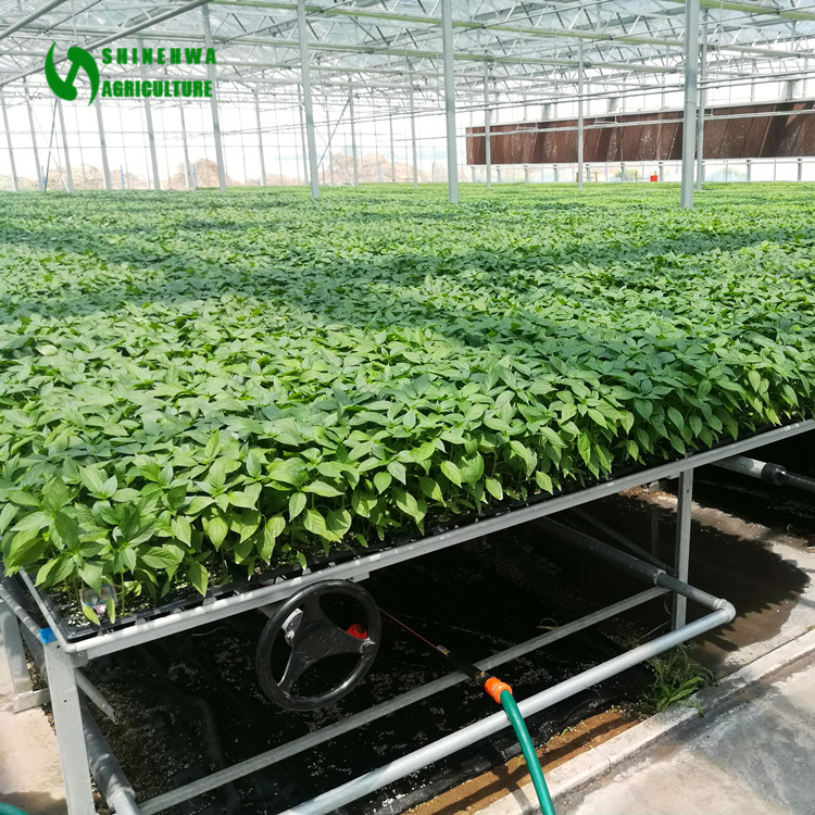 Nursery Equipment Planting Table Greenhouse For Agricultural