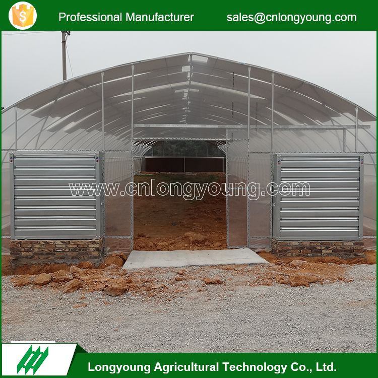 Galvanized Steel Structure 10m Tunnel Plastic Covering Greenhouse