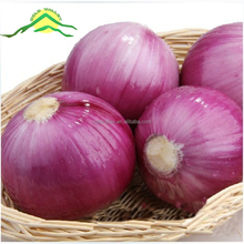 origin manufacture direct sale high quality cheap price fresh red onion price 1 kg