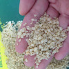 Huo ma ren Factory wholesale Organic Chinese Hemp Seeds