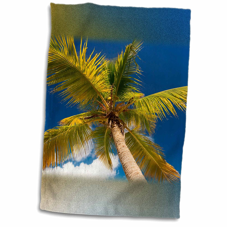 3dRose Danita Delimont - Beaches - Palm Tree, Sandy Island, British Virgin Islands - 12x18 Towel (twl_226532_1)