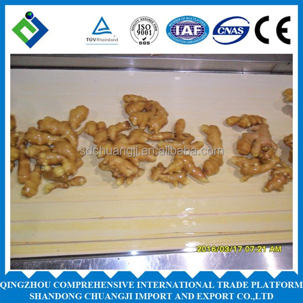spicy mature ginger with high quality