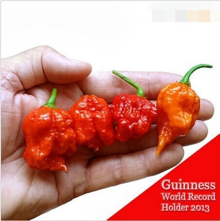"100 SEEDS – 100% Genuine Fresh Rare Red ""Carolina Reaper"" Pepper Seeds (hot chilli ) Organic Vegetable Seeds * Free Shipping"