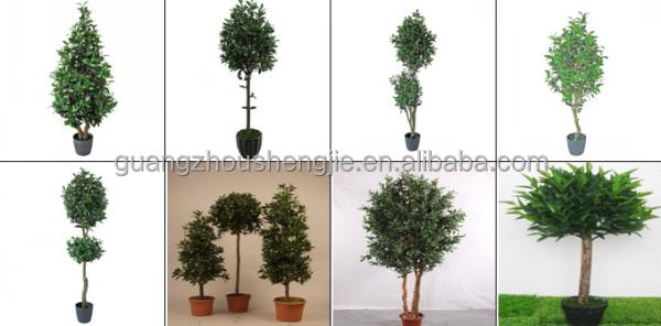 100 garden trees types compact shrubs for easy gardens