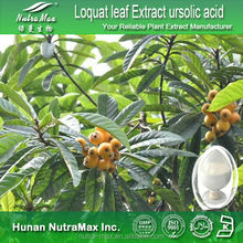 GMP Factory Sale -Loquat leaf Extract ursolic acid ,loquat extract, ursolic acid loquat leaves extract 25% -NutraMax