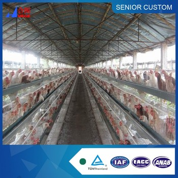 Steel Material and prefabricated chicken poultry house Use automated layer chicken shed