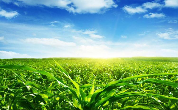 Nouveau style dupont sorona polaire tissus 49% Chanvre 40% coton bio 11% Sorona
