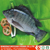 #chinese fish factory sell farm raised Tilapia