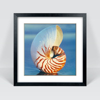 Seashell Photo Picture Frames Modern Style 3D Sea Shell Pattern Frame