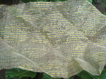 Sinamay Woven Inserted with Lurex