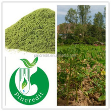Pure moringa leaf extract moringa oleifera powder