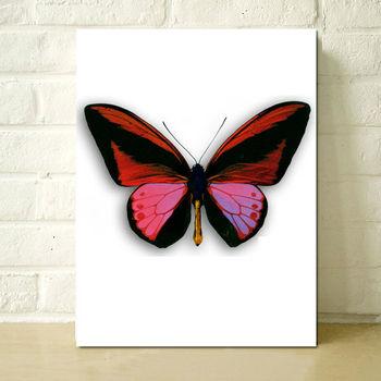 Kelebek Boyama Baskılı Stilleri Buy Kelebek Boyama Baskılı