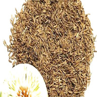Pu Gong Ying Wholesale Perennial Flower Seeds dried dandelion seeds