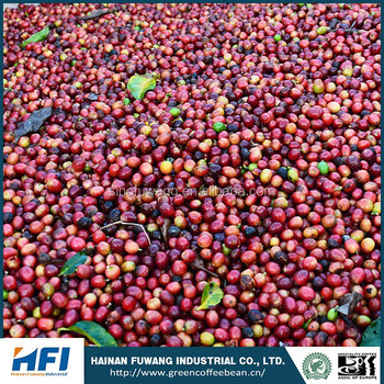 coffee beans arabica organic coffee beans suppliers