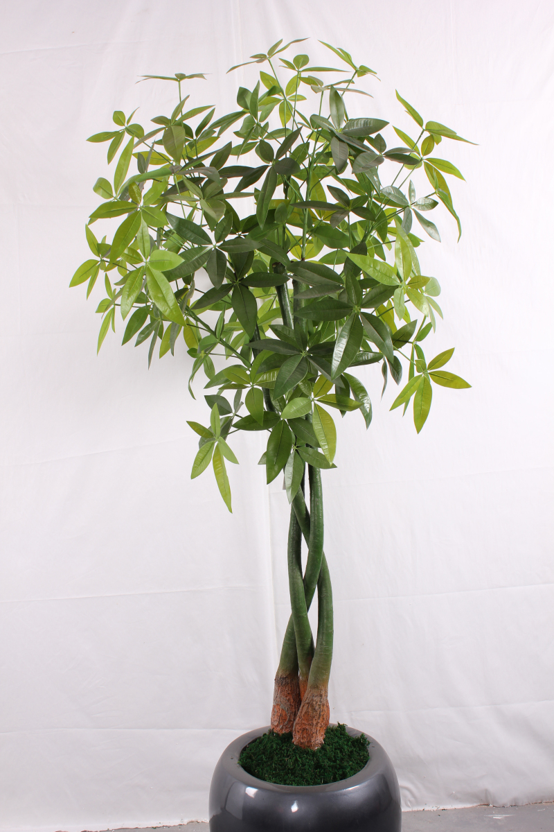 Hx artificial pachira money tree buy plastic