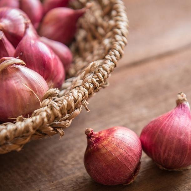 2019 new crop fresh red onion best price