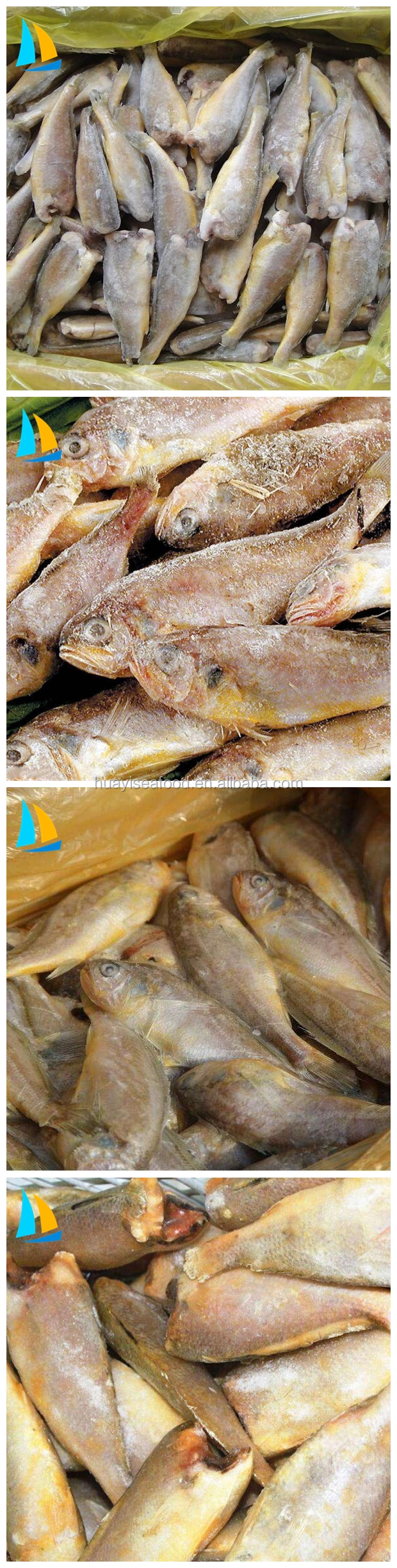 New product frozen seafood with factory price frozen little yellow croaker