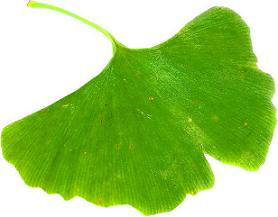 High Quality Ginkgo Biloba Extract 24/6 Ginkgolic Acid<1ppm