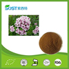 wholesale natural organic valerian extract