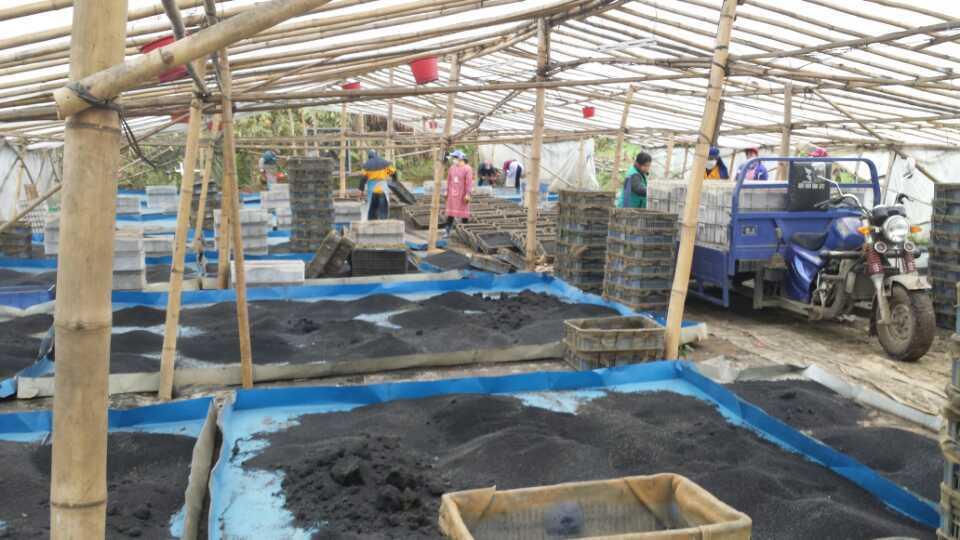 Hot New Products 2015 China Supplier Aquarium Plant Soil Active ...