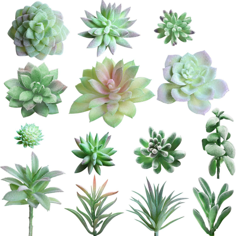 Cheap Cheap Succulents Find Cheap Succulents Deals On Line At Alibaba Com