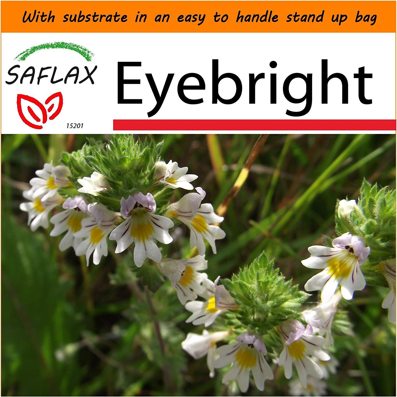 SAFLAX - Garden in the Bag - Eyebright - 200 seeds - Euphrasia officinalis