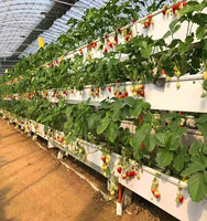 Greenhouse Vegetable Soilless Culture Planting Tomato With nft Hydroponic System