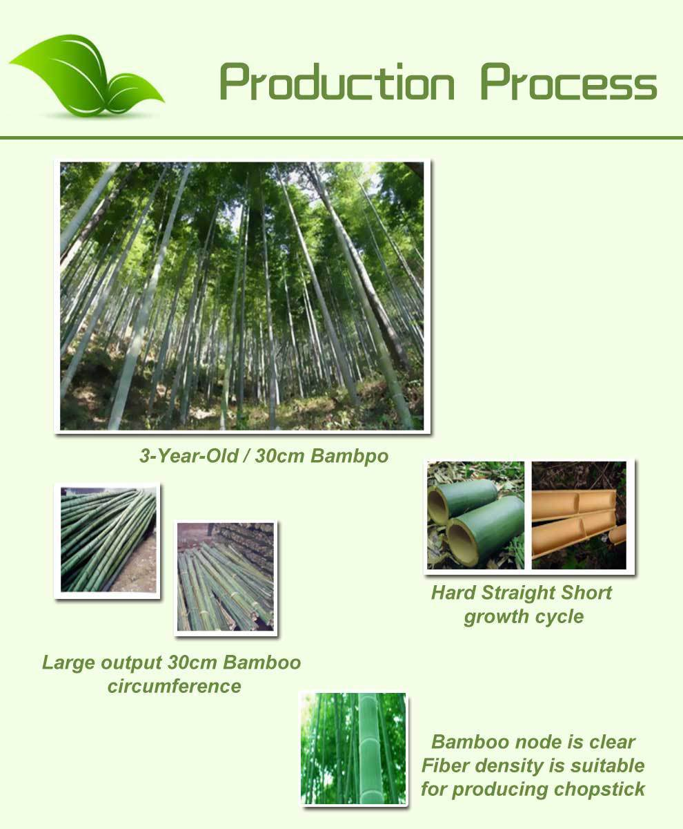the production of bamboo Bamboo growing in alabama in 1959 when a planting of approximately 4 acres of timber bamboo was made to compare yields of bamboo and pine for pulp production.