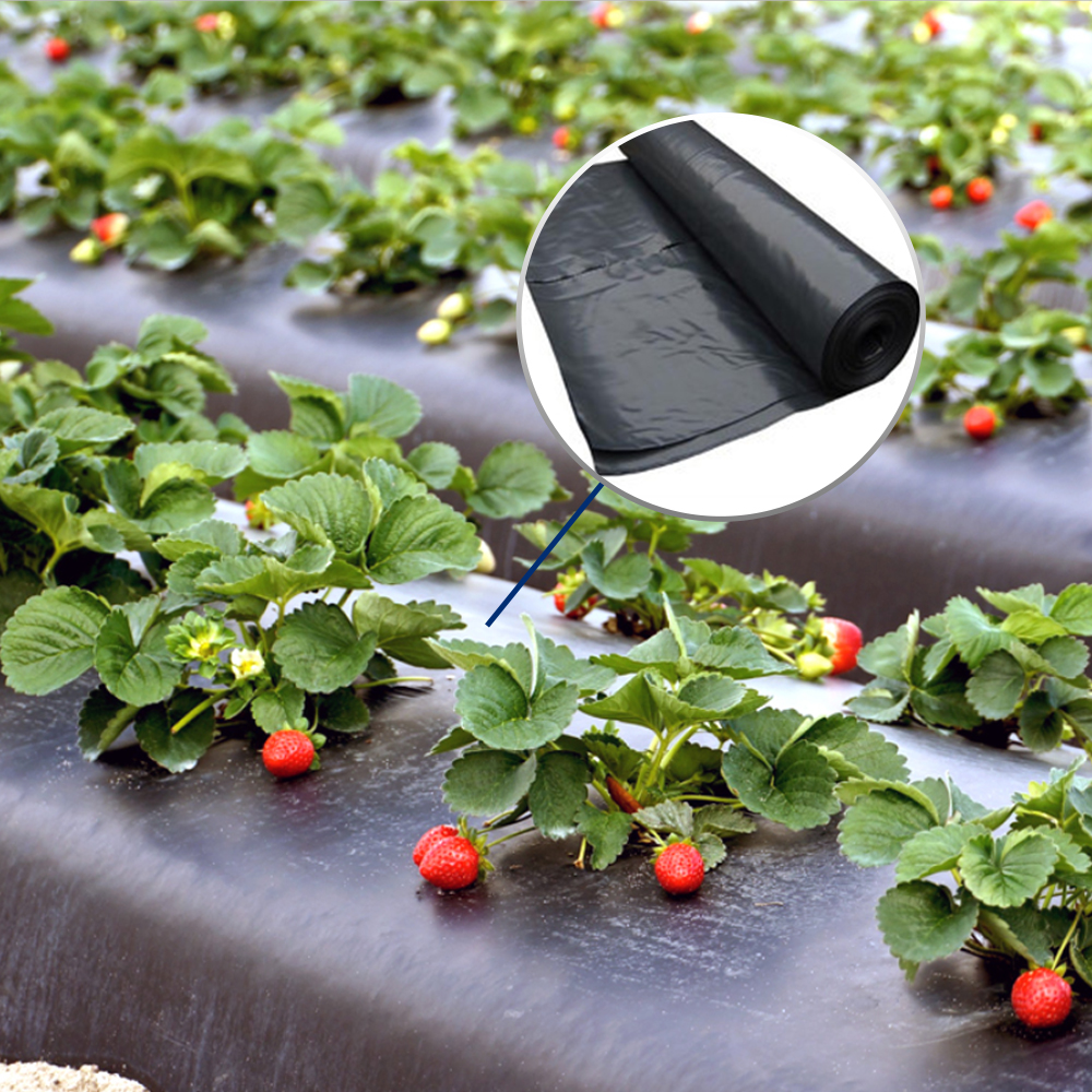Custom biodegradable agriculture plastic mulch film
