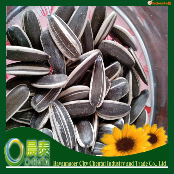 white sunflower seeds packing 25kgs products of 2013 size 8+ mm