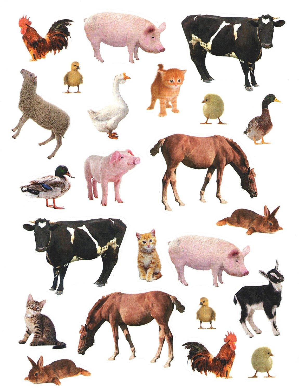 Buy Photographic Animal Stickers ~ Farm Animal Fun! (23 Stickers, 1