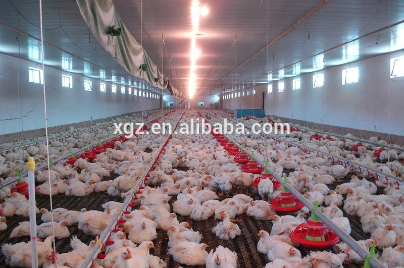 modern poultry farm house design drawing with automatic