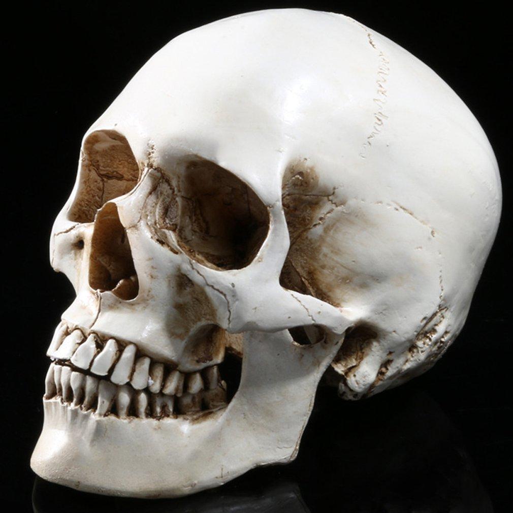 Gudessly 1:1 Life Size Model Human Skull Replica Model Anatomy White Resin Skull High-Precision Teaching Tool Halloween Decor