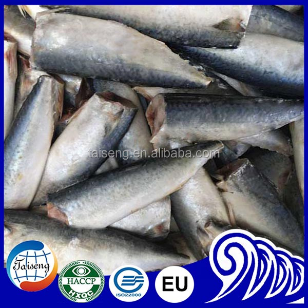 Block shape and mackerel variety frozen Pacific mackerel HGT from china
