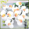 China Gergeous Lifelike Indoor Table Setting Ideas Silk Artificial Preserved Moth Orchid Flower