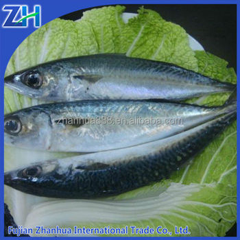 pacific chub mackerel canning quality, scomber japonicus fish whole round 300-500g