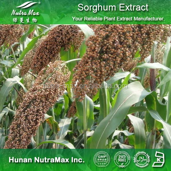 Sorghum bran extract