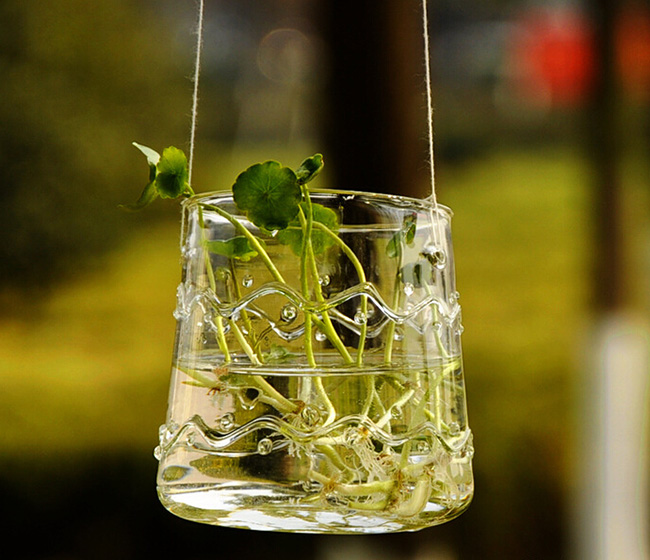 Hanging clear glass hydroponic container handblown glass terrarium