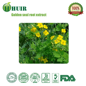 Chinese Herb Golden Seal Root Extract, CAS 528-48-3