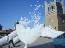 100% biodegradable white Dove Balloons for wedding decoration