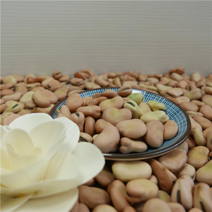 High Quality Broad Bean Fava Bean horse beans