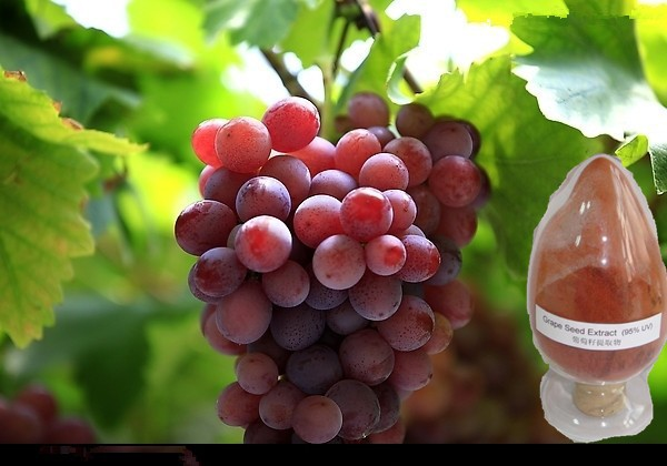 Grape Seed extract Aging and enhance immunity Proanthocyanidins