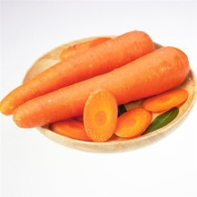 Wholesale high quality bulk carrot/fresh australian carrots