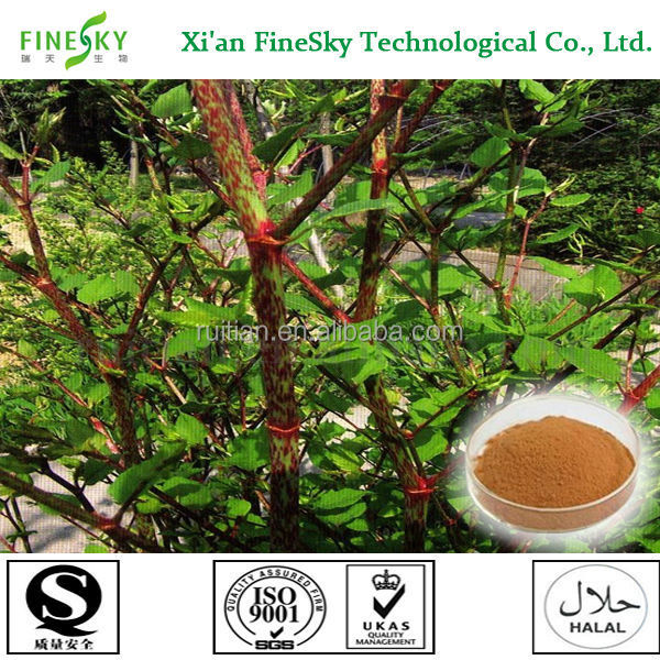 Herb medicine weight loss natural giant knotweed extract