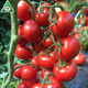 LOREAL F1 Seed Tomato F1 Hybrid Red Hybrid Tomato Seeds From China