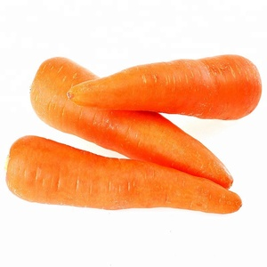 China Organic Fresh Red Carrots Size L