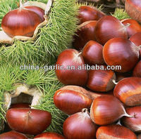 2013 New Crop Organic Fresh Chestnut