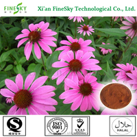 new season echinacea herb extract Polyphenol 4% by UV